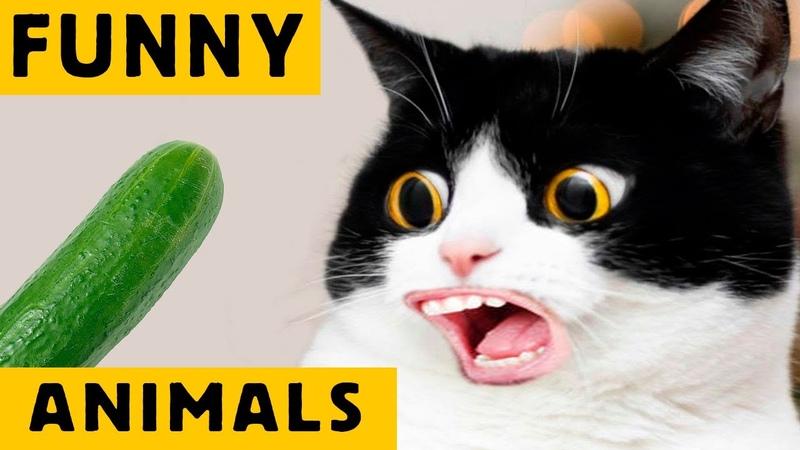 СМЕШНЫЕ ЖИВОТНЫЕ ПРИКОЛЫ 2020 FUNNY ANIMALS funnyanimals смешныеживотные приколы