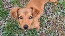 Спасённые собаки/Жизнь стаи