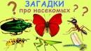 Загадки про НАСЕКОМЫХ. Угадай насекомых. Развивающий детский мультик загадка