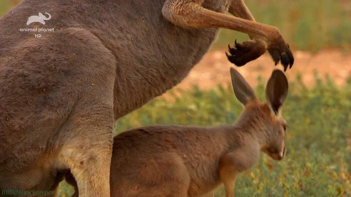 Дикая Австралия 1 часть Познавательный природа животные 2015