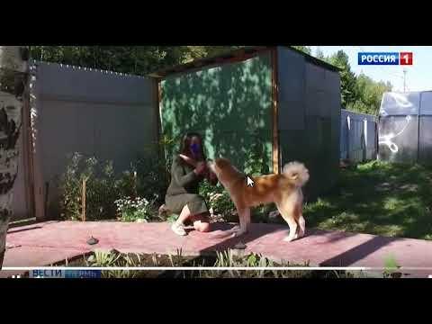 ТК Россия 1 Пермь о председателе УИК школы 32 Араповой С Н
