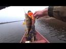 Осенняя рыбалка на спининг. Окуни, щука и даже хариус! р.Северная Двина. 12.10.2020