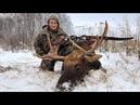 Загонная охота на лося из лука / Driving Hunting Moose Archery