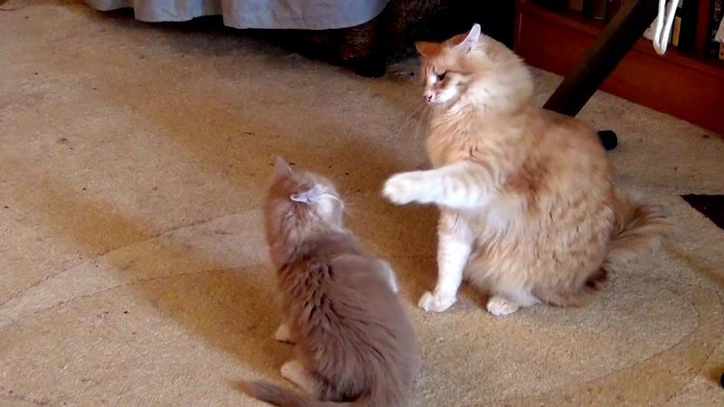 Забавные котикикотыприколыfunnycatsfunnyanimalswatchall, ourpets laughjoke