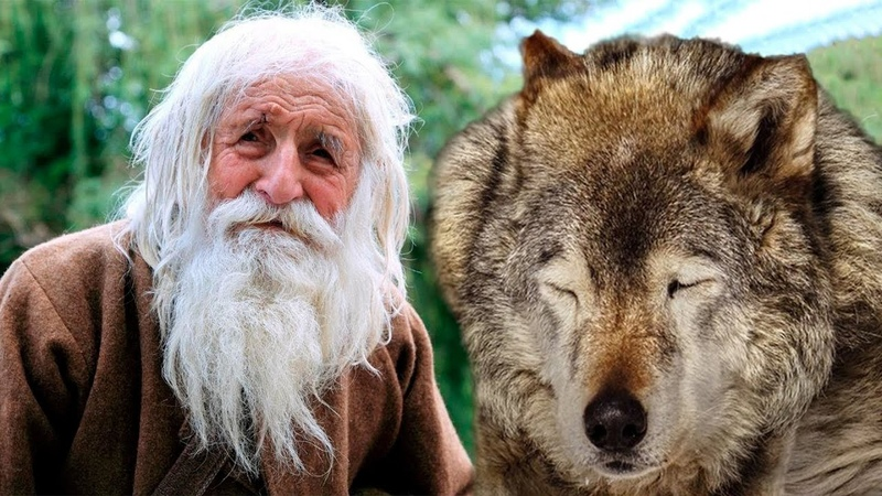 Старый волчара тихо умирал у деда в сарае. Так бы и закончилось, но судьба распорядилась иначе!