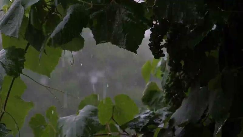 Pluie et Orage pour Dormir en moins de 5 Minutes Bruit de Pluie dans la Forêt Atlas