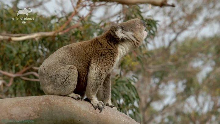 Дикая Австралия 2 часть Познавательный природа животные 2015
