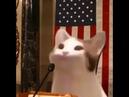 Кот важная шишка