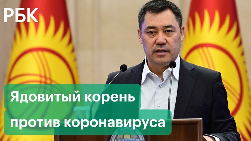 Жапаров рекомендует. Коронавирус в Киргизии лечат ядовитым корнем