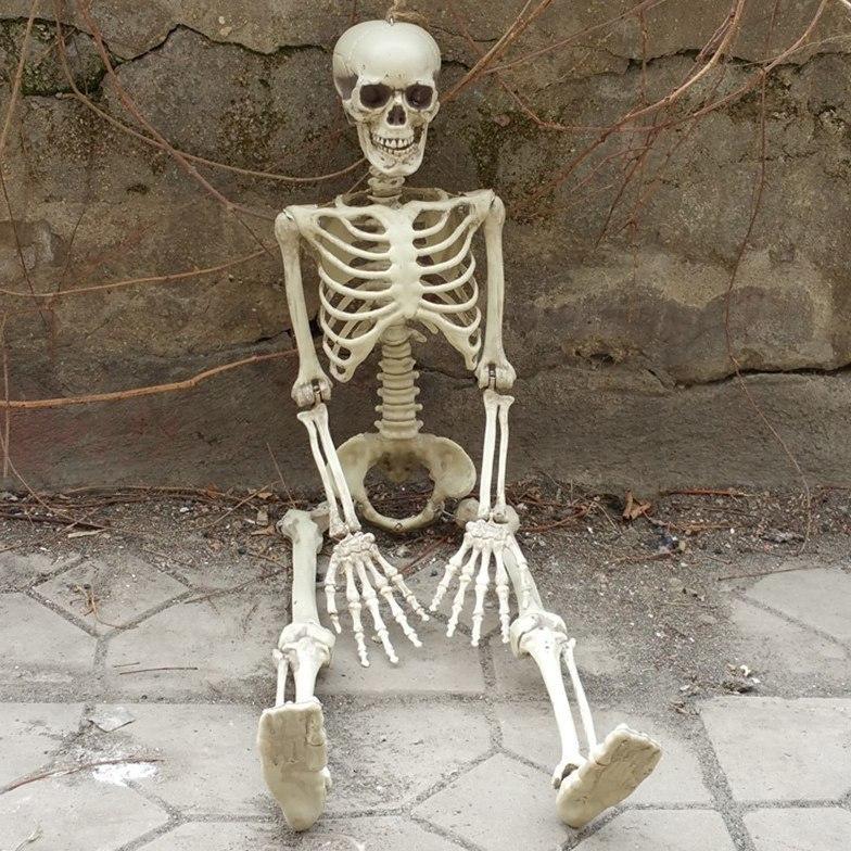 Модель человеческого скелета -