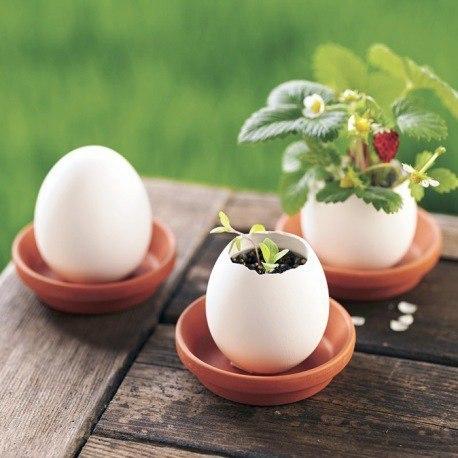 Цветы в яйцах -