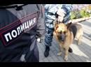В Тольятти объявлен в розыск балконный насильник