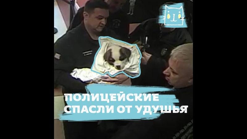 Прибежала в полицейский участок чтобы спасти своего щенка
