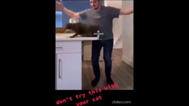 Как приземляются коты у других хозяев и как приземляется мой Мурзик