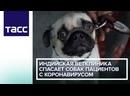 Индийская ветклиника спасает собак пациентов с коронавирусом