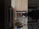 Волновой Телекинез в Микроволновке! Telekinesis inside the microwave