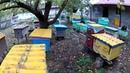Как не надо делать в пчеловодстве Горький опыт. Пчеловодство 2020