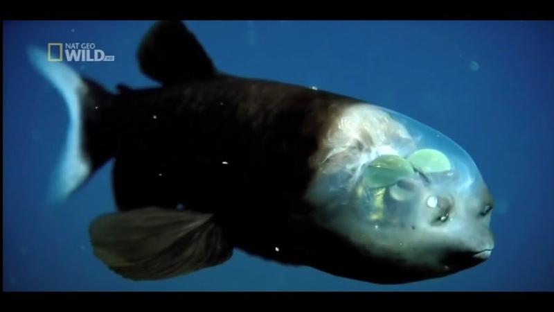 Самые странные в мире Необычные части тела в дикой природе Документальный фильм Nat Geo Wild HD