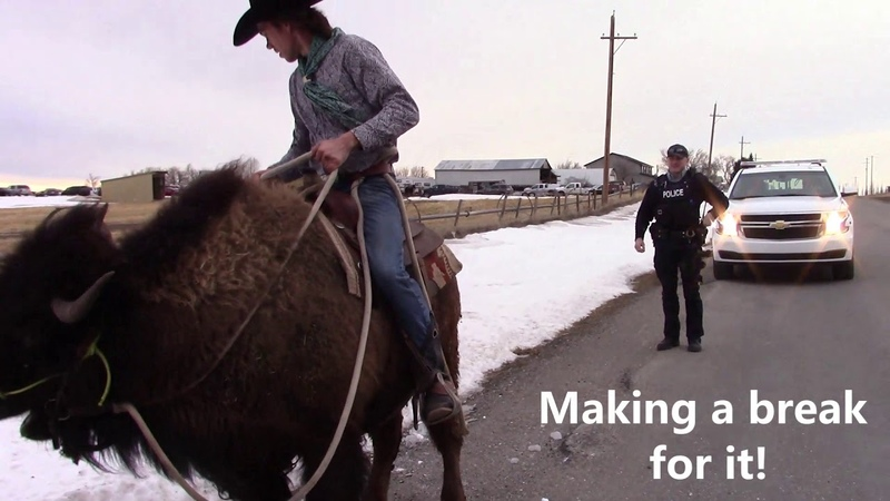 Buffalo Outruns Cop